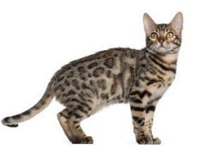 Cat Repellent Products