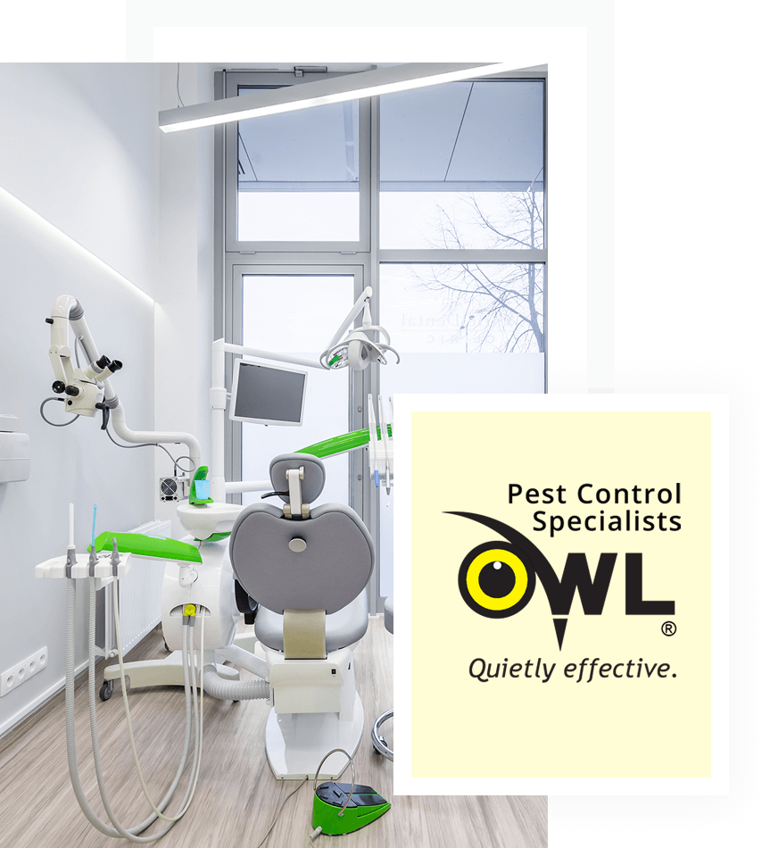 Pest-control-services-for-clinics-Owl Pest control Dublin