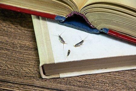 Silverfish on books