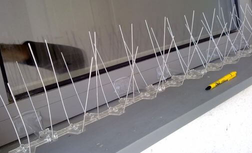 Bird spikes fitted to a window ledge 2 Owl Pest Control Ireland