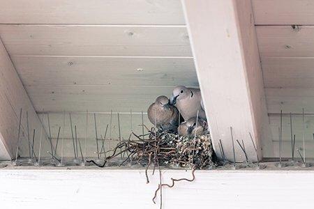 Poor Quality Bird spikes. - Owl Pest Control Dublin