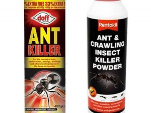 Chemical Insect Powders