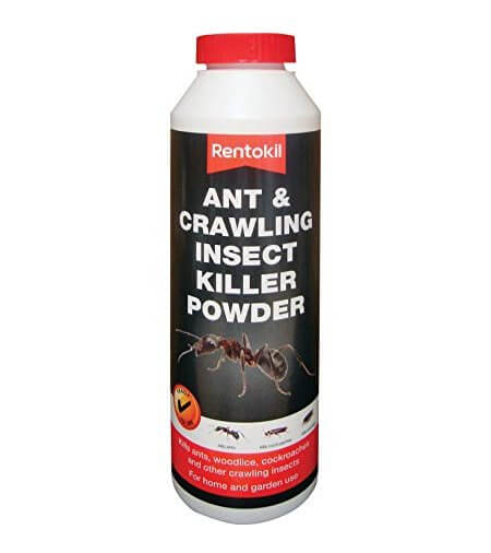 Rentokil ant Dust-Owl Pest Control Ireland