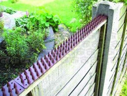 Cat Spikes Owl Pest Control Ireland