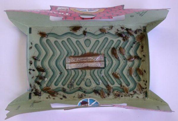 Cockroach-Trap-Owl Pest control Ireland