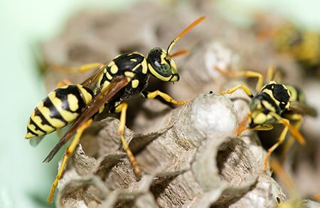 Wasp nest removal.