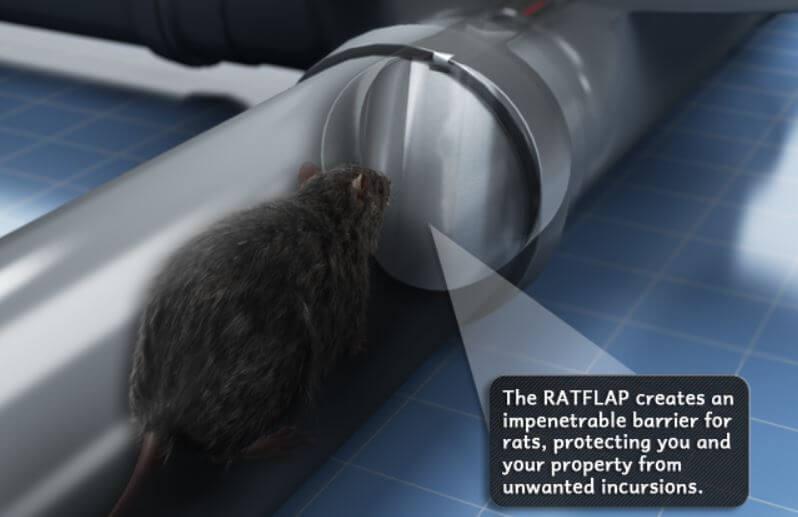 Rat Flap