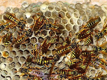 wasp-nest-removal-close-up-nest.Owl pest control Dublin.