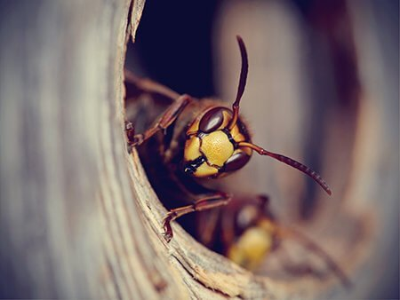 wasp-nest-removal- Owl pest control Dublin.