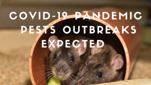 Pests outbreaks expected during the Coronavirus pandemic - Owl pest control Dublin