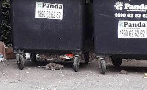 rats moving around wheelie bins in dublin - owl pest control