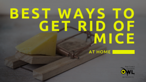 Best Ways to Get Rid of Mice at Home - Owl pest control Dublin