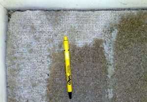 Clothes Moths damage to carpets - Lucan - Owl pest control Dublin