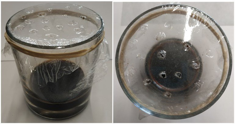 Homemade Fruitfly Trap - Basalmic vinegar and small holes on cling film - Owl pest control Dublin