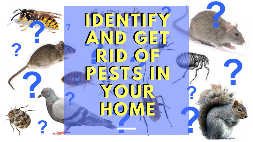 Identify and Get Rid of Pests in your Home - Owl pest control Dublin
