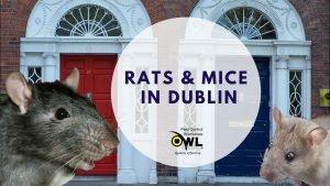 Rats & Mice in Dublin - Owl pest control