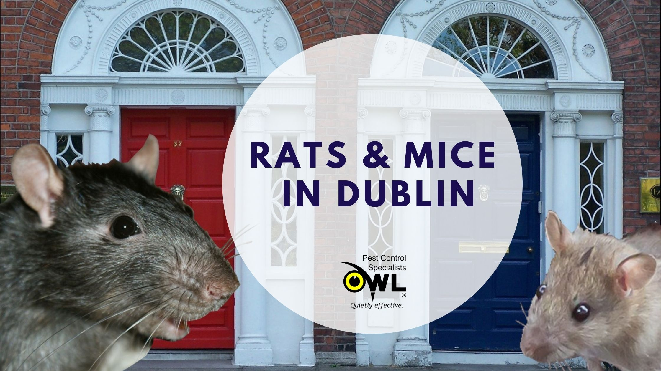 Rats & Mice in Dublin - Owl pest control