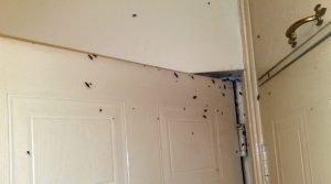 cockroach infestation - - Owl pest control Dublin