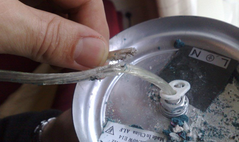 Mouse gnawed ceiling lamp leaving electrical wire exposed (fire hazard)