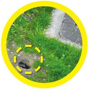 A rat burrow beside sewer shore - Owl Pest Control Dublin