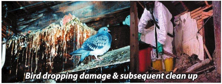 Bird droppings damage - Owl Pest Control Dublin