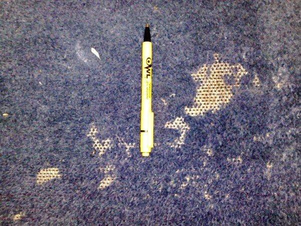 Carpet Moth Damage - Owl Pest Control Dublin