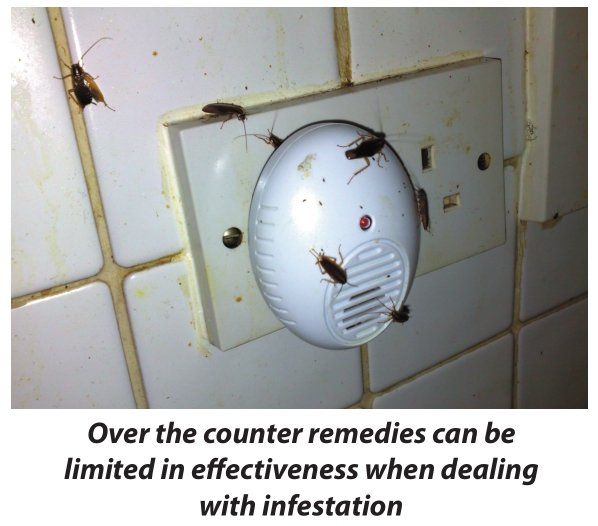 Cockroaches not deterred by electronic repellents - Owl pest control Dublin