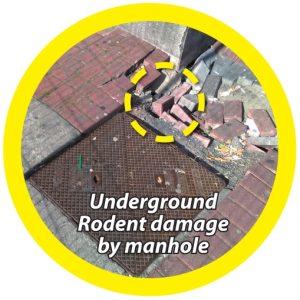 Major underground rodent damage by a manhole - Owl Pest Control Dublin