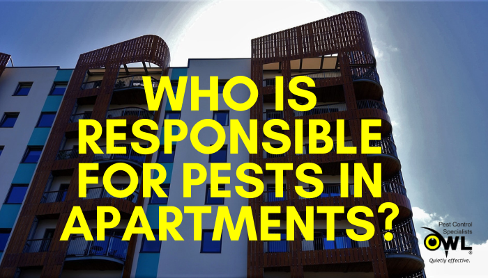 Who is Responsible for Pest Infestations in Apartments - Owl Pest Control