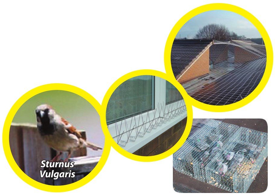bird exclusion trapping spikes cages nest - Owl Pest Control Dublin