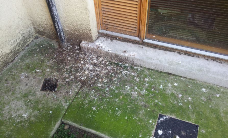 Pigeon Droppings - Owl Pest Control Dublin