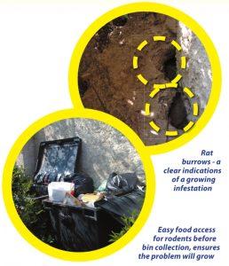 rat burrows and wheelie bin feeding - Owl Pest Control Dublin