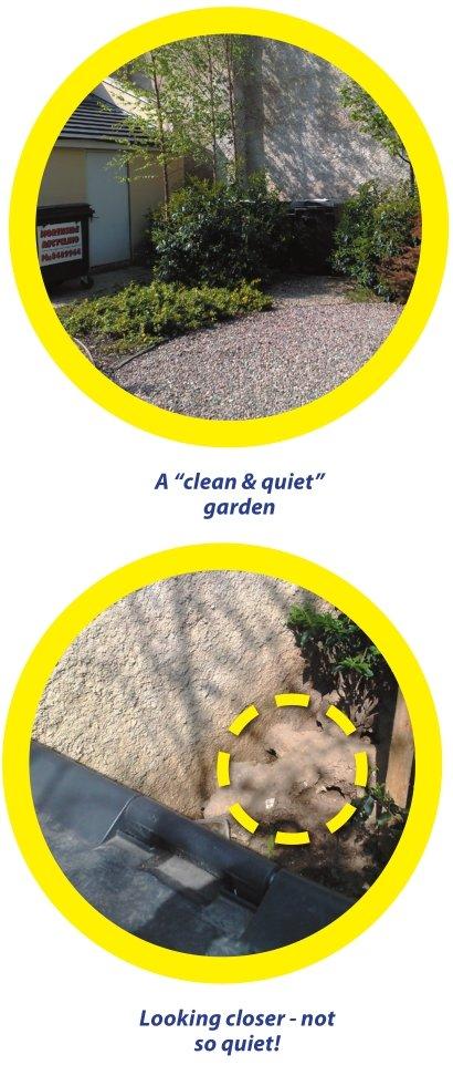 rat burrows in a landscaped property development's garden - Owl Pest Control Dublin