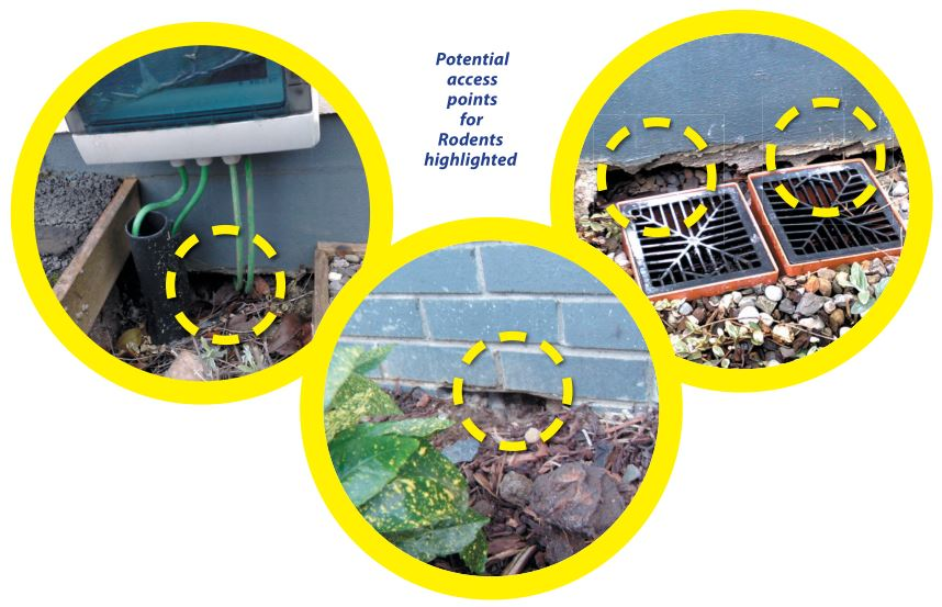 rodent-rat-mice-access-to-apartment-blocks - Owl Pest Control Dublin