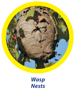 wasp-nests - Owl Pest Control Dublin