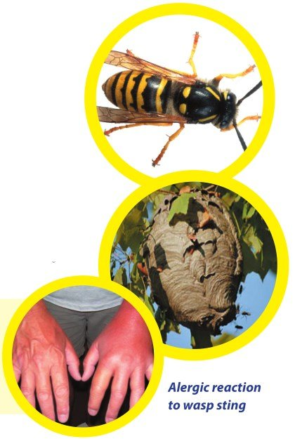 wasp wasp-nest allergic reaction - Owl pest control Dublin