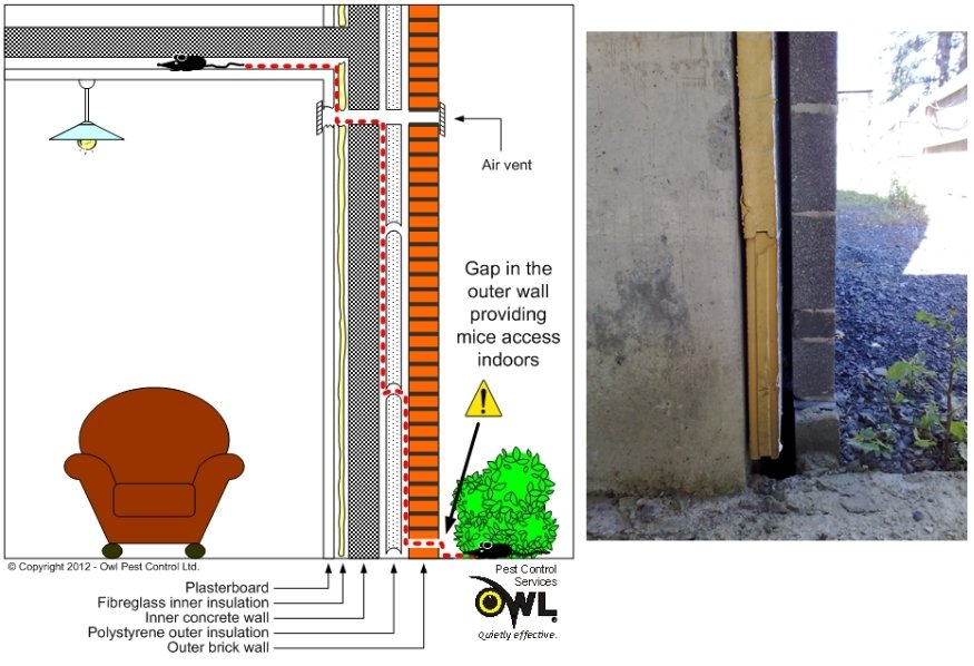 Mice or rat access to house through walls