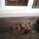 Rat access to apartment via toilet pipes - Owl pest control Dublin