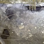 Rat burrows in garden - Owl pest control Dublin