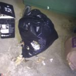Rats eat food from fallen bin bags on the ground - Owl pest control Dublin