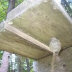 The really start of a wasp nest under decking