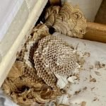 Wasp nest built in a bed drawer