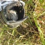 Wasp nest built in a shoe - Owl pest control Dublin