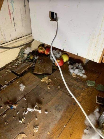 rat nest with fruits under kitchen units - Owl pest control Dublin