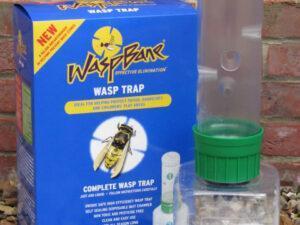 wasp bane