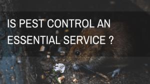 Is Pest Control an Essential Service in Ireland-Owl pest control Dublin