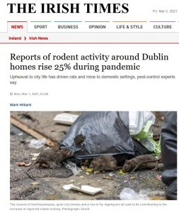 Owl speaks with Irish Times - reports rodent activity during pandemic