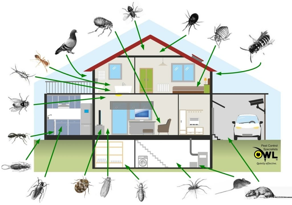 Pest access to houses & residential properties - Owl Pest Control Dublin