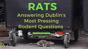 Rats - Answering Rodent Questions Blog Banner