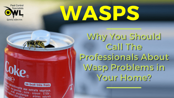 Why You Should Call The Professionals About Wasp Problems in Your Home